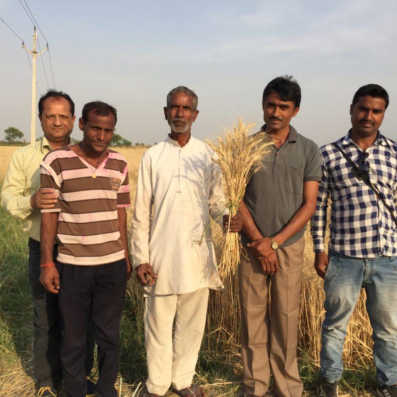 organic-feed-india