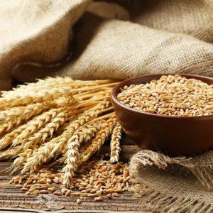 wheat-900
